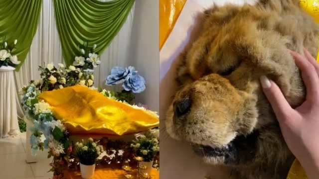 女子花2千为去世爱犬办告别仪式:感情不能用金钱衡量