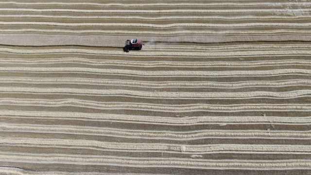 秋收场面像幅画!黑土地麦子熟了,3小时收割165亩