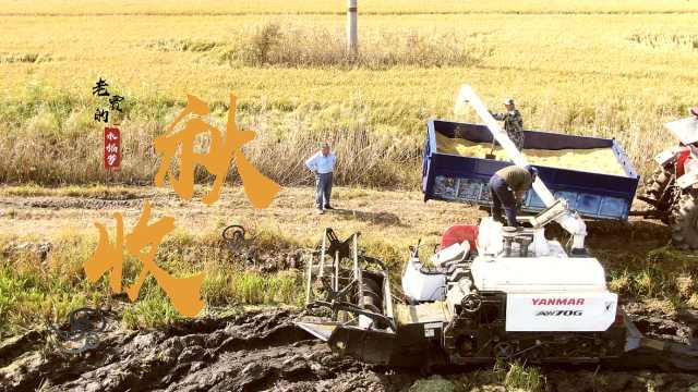 黑土地上的秋收|水利局长转行当农民:中国农民不比外国差