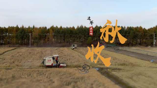 黑土地上的秋收|稻客夫妻以车为家游走半个中国:为娃再苦也值