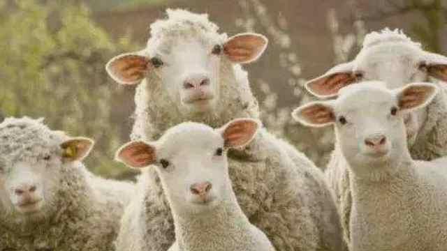 """桐梓援鄂抗疫英雄收到蒙古国的""""暖羊羊"""""""