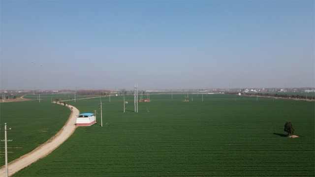 """""""中原粮仓""""40万亩冬小麦返青:亩产超千斤,麦种销全国"""