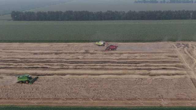 """台风""""烟花""""过后东北抢收小麦:3台收割机4小时收割155亩"""