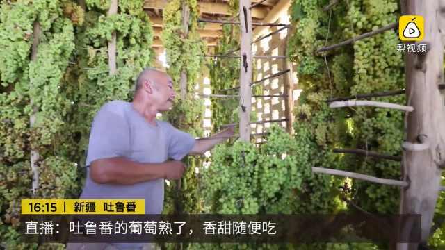 舞蹈吐鲁番的葡萄熟_直播:吐鲁番的葡萄熟了,香甜随便吃_ING现场-梨视频官网-Pear Video