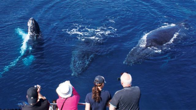 美女乘船出海观鲸,蓝鲸迎面游来
