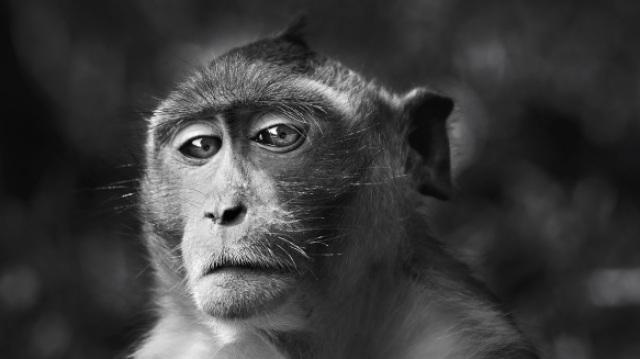 6亿年间99.9%的动物都已灭绝