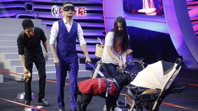 11年训练的导盲犬比大熊猫还珍贵