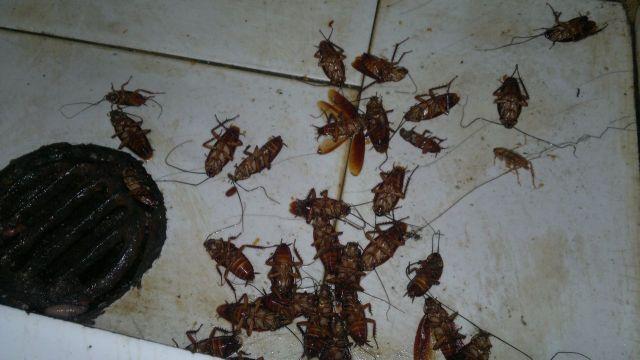简单一招,将蟑螂消灭干净!