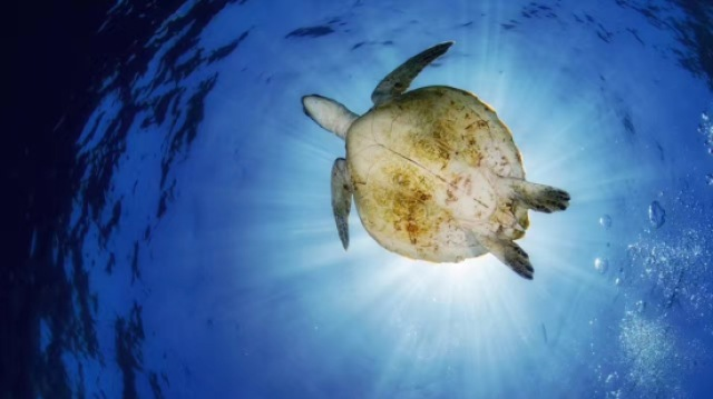 潜行天下:海龟的故乡