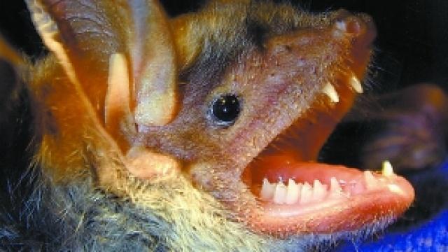 最丑洞穴怪物:0.2秒致死猎物