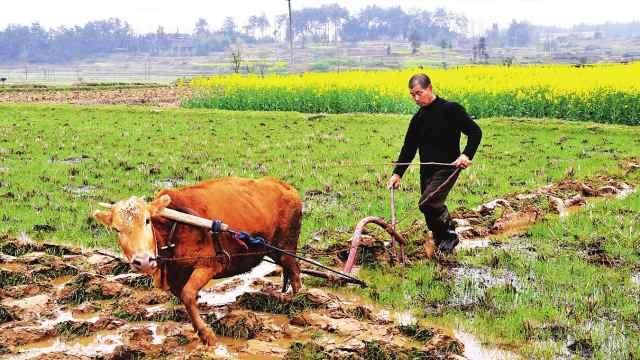 注意!农村闲置土地能领双重的补贴