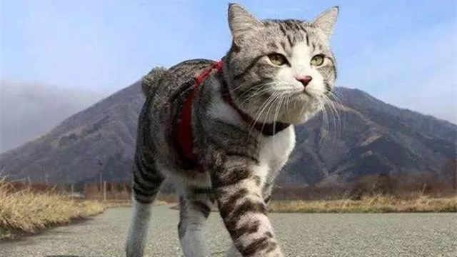 为什么猫离家出走后,再也不回来?