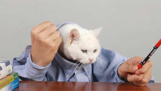 孤独症频发,猫医生教你如何应对