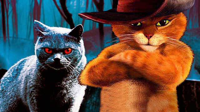 猫的进化!从恶魔到萌宠