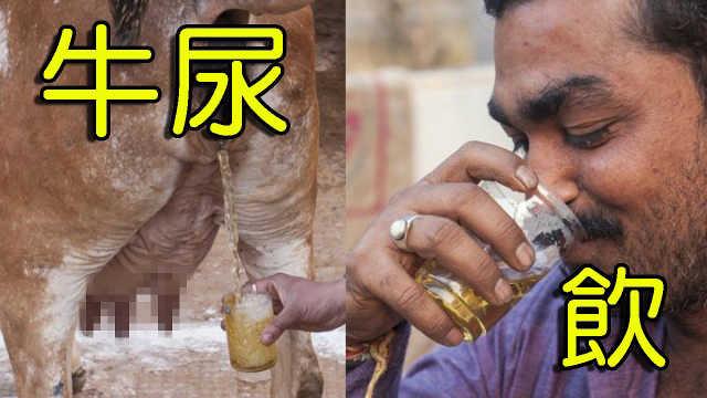 为什么印度人那么喜欢喝牛尿?