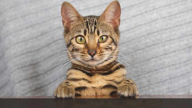 每周喵闻:猫界离婚率上升为哪般?