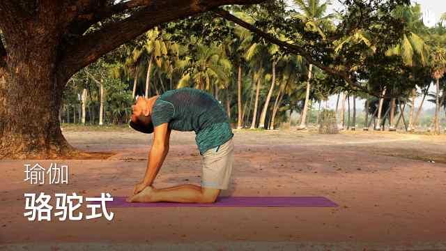 sikana瑜伽教程:骆驼式