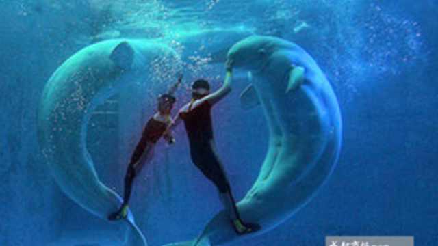 西南唯一海底秀 人鲸共舞比心