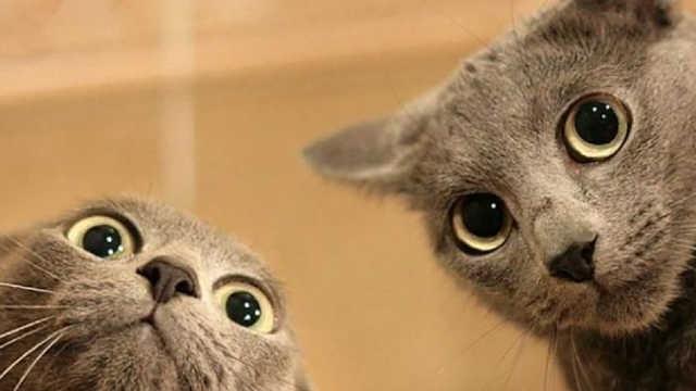 盗摄:向广大群众披露猫的真面目!