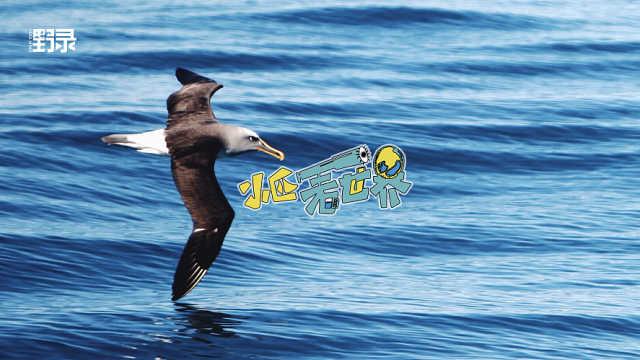 在新西兰和一只海狮怼上?谁能赢?