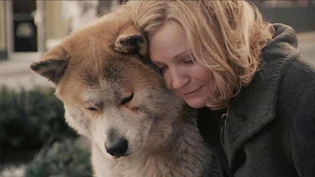 催泪解读忠犬八公,温情看哭众人