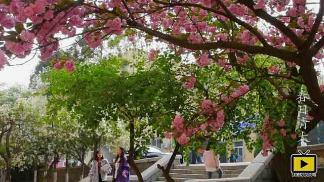 如诗如画:春日的青岛大学