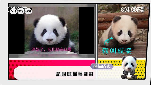 请问你熊猫style了吗