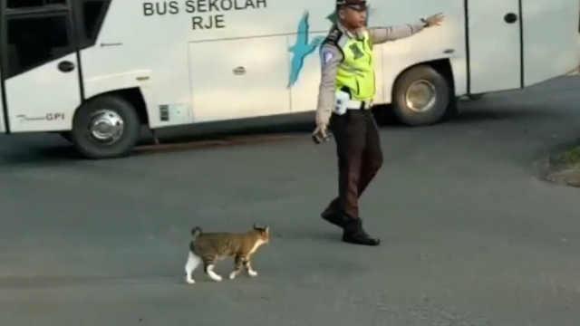 警察叔叔带流浪猫过马路,超暖啊