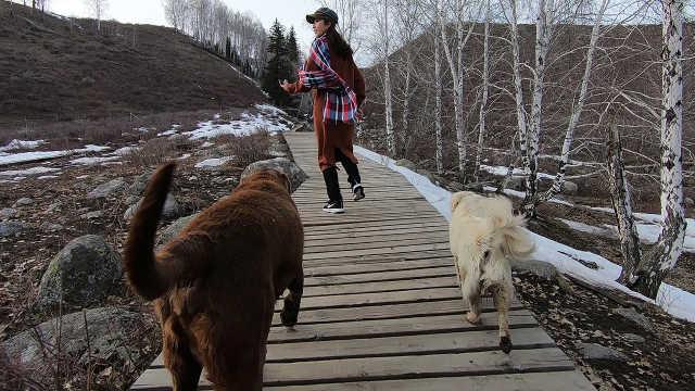 村里土狗主动带游客上山玩