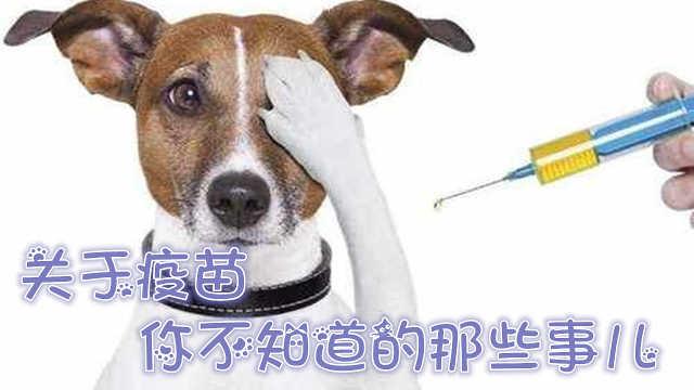 文明养犬小课堂:关于疫苗那些事儿