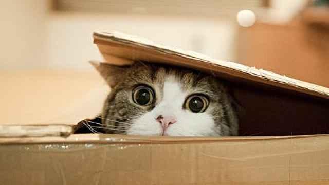 为什么盒子放久了会长猫?