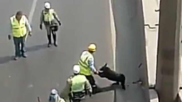 警察拦截高速公路,为营救狗狗