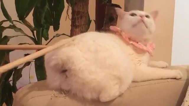 猫:铲屎的,你这是大不敬你知道么