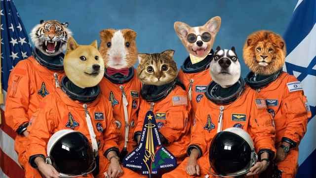 哪些小动物当过宇航员?