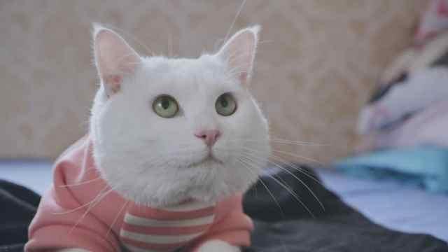 喵星人:你是不是有了别的猫?