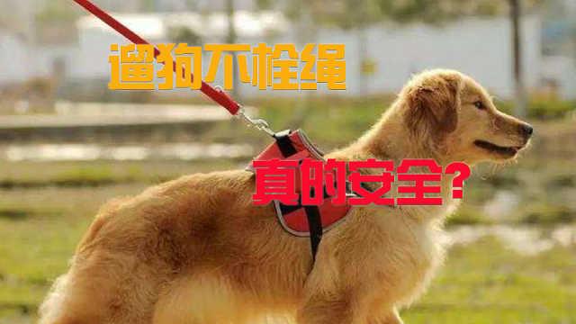 遛狗不栓绳的狗真的安全吗?