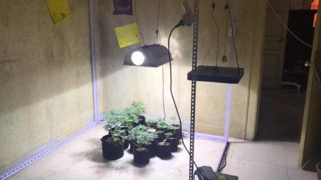 男子自学室内种大麻,盈利15万余元