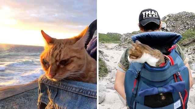幸福的小猫咪,跟着主人环游世界