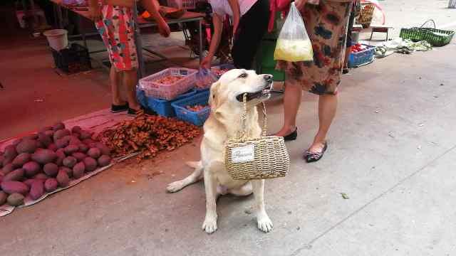 萌化了!狗狗随主人买菜帮