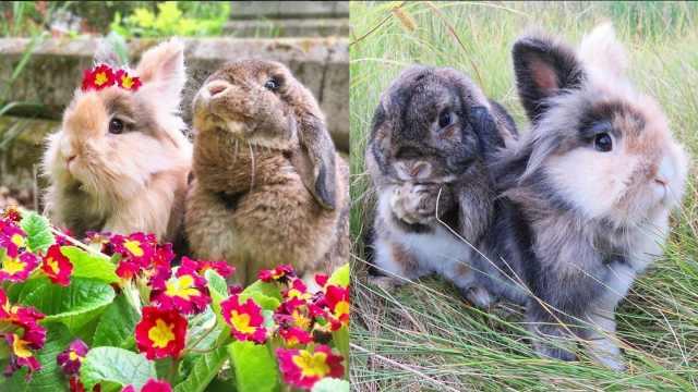 活宝兔子姐弟,一只乖巧一只欢脱