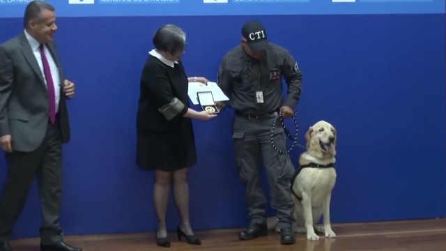 高龄缉毒犬在退休典礼上萌态百出