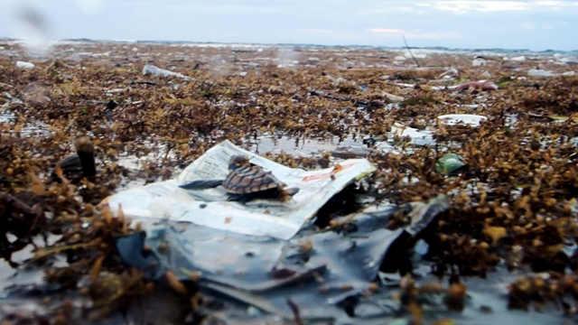 小海龟在飘满塑料垃圾的海面上挣扎