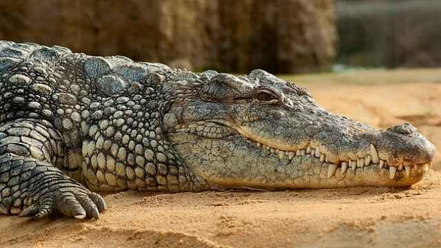 草原动物科普小百科之鳄鱼