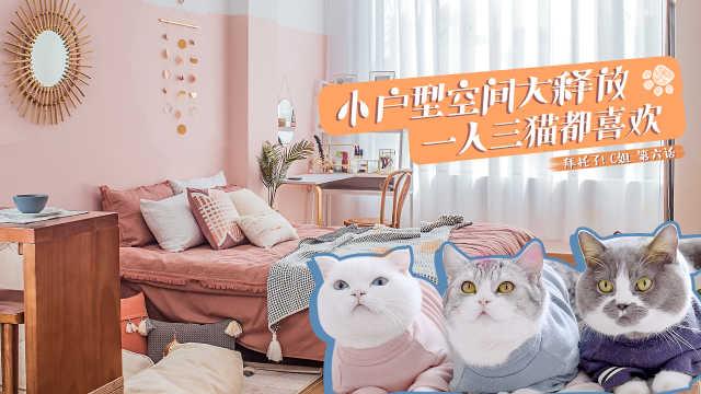 一人三猫的裸粉摩洛哥风猫宅