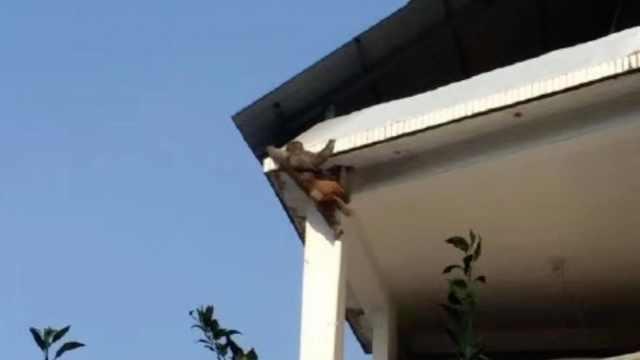 猴哥进村闲逛,村民:这猴又胖又漂亮