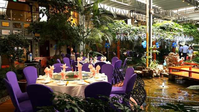 酒店把大森林搬进了餐厅,生意火爆
