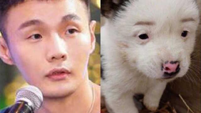 撞脸李荣浩脸型的狗仅售一块钱?