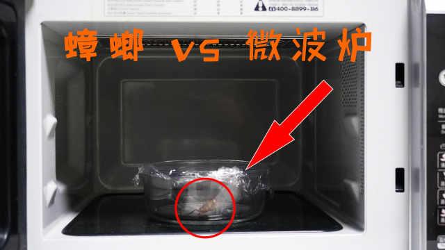 把一只蟑螂放进微波炉里会如何?