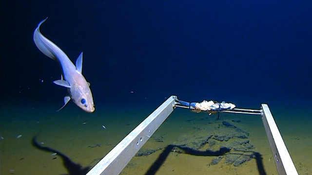 人类在万米深的海底发现塑料垃圾