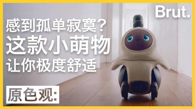 感到孤单?这款机器人让你极度舒适